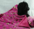 Large Beautiful Cuddlesoft Dog Blanket