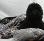 Medium Beautiful Cuddlesoft Dog Blanket