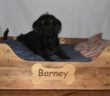 Large Personalised Wooden Dog Bed 100cm x 75cm (approx)